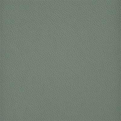 24 Shelly Lichen 400px